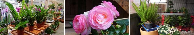 Plantas para el Día de la Madre en Tot en Ú