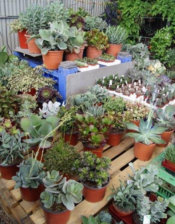 Exposición de plantas suculentas y cactus en Tot en Ú