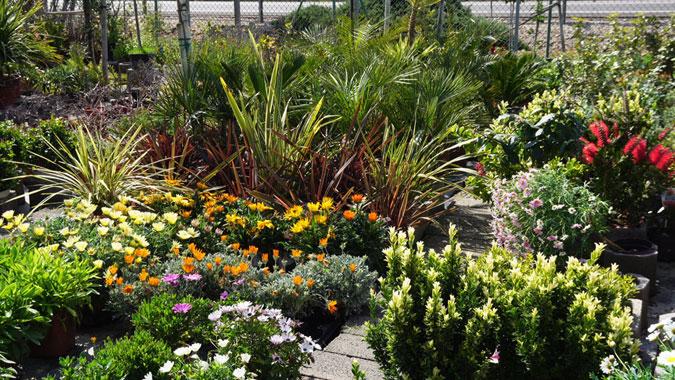 Plantas de exterior en Tot en Ú