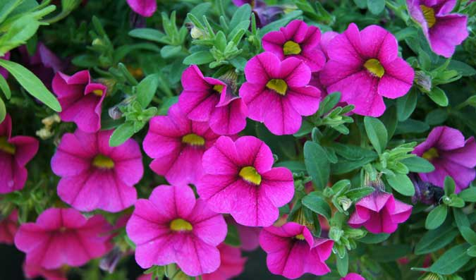 Flores para terrazas y balcones jardiner a tot en u for Plantas baratas de exterior