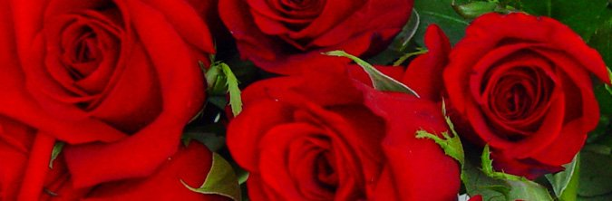 Flores naturales a domicilio   Jardinería TOT en U