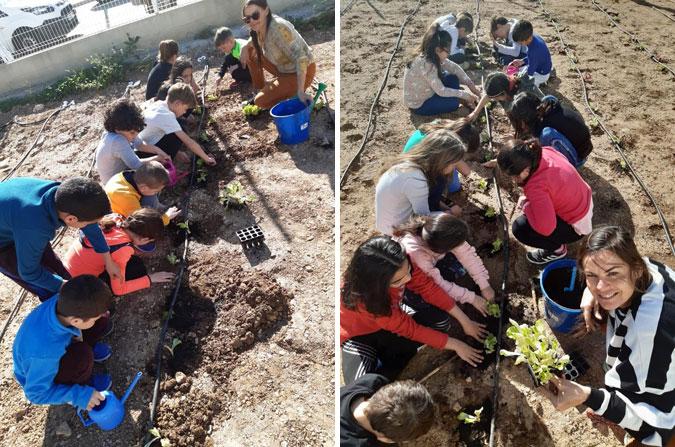 Plantación de hortalizas en el CEIP Jaume I de Alcasser