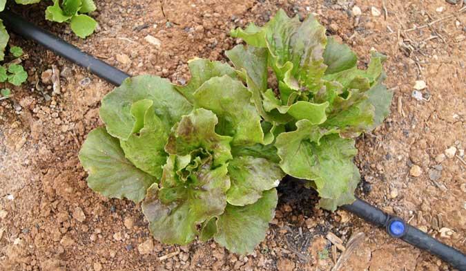 Preparar el huerto para el invierno jardiner a tot en u for Preparar el huerto en invierno