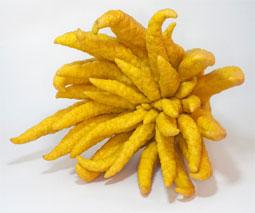 Mano de Buda (Citrus medica)