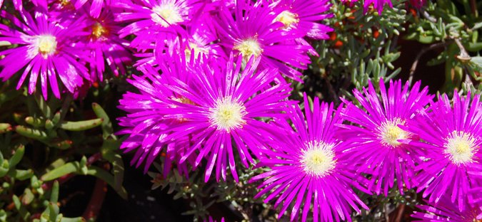 Plantas de exterior en Tot en U