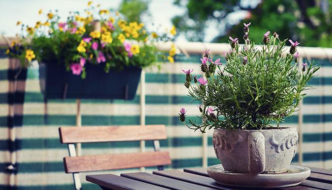 Plantas arom ticas para balcones y terrazas - Plantas de balcon ...