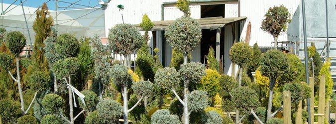 Centro de Jardinería en Valencia Tot en U