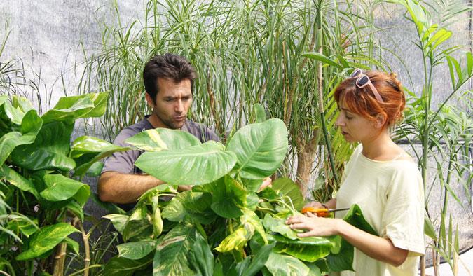 Practicas en un centro de jardinería