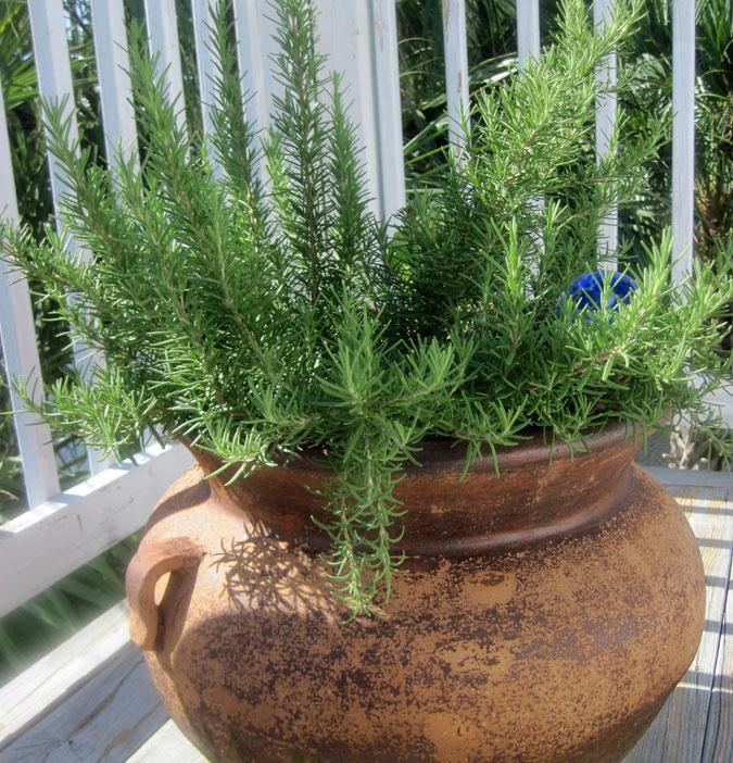 Plantas arom ticas para balcones y terrazas for Tipos de plantas aromaticas