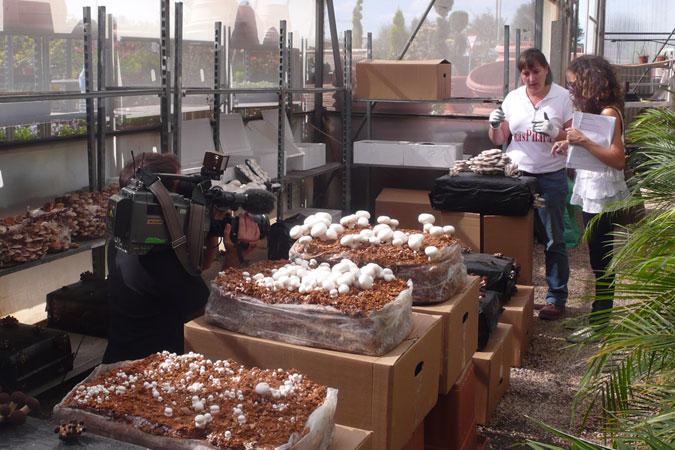 Cultivo de setas en casa - Jardineria en valencia ...