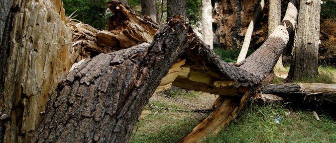 Poda y tala de urgencia de árboles