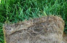 Detalle del césped en tepe